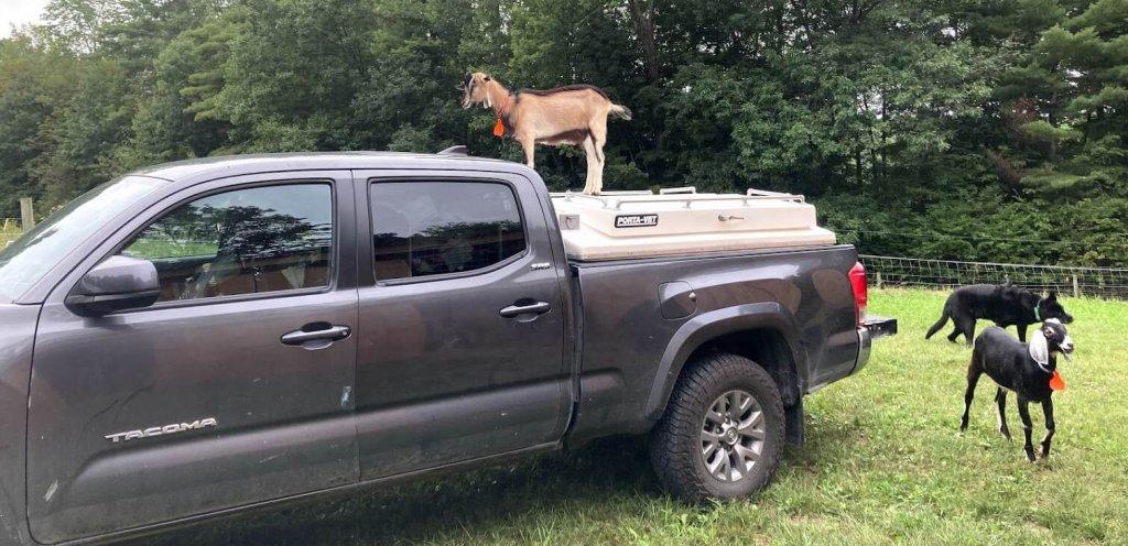 Vermont Large Animal & Farm Animal Veterinarian