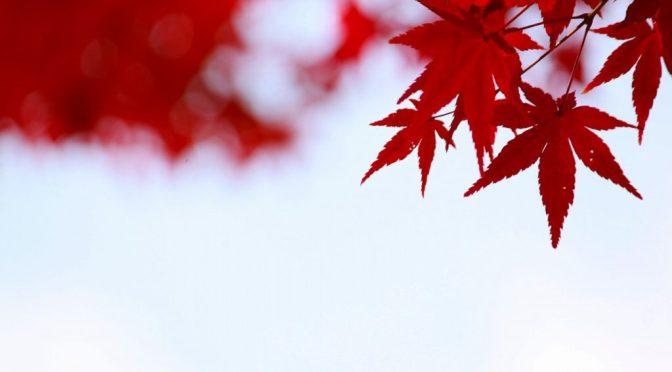 秋の撮影会☆☆