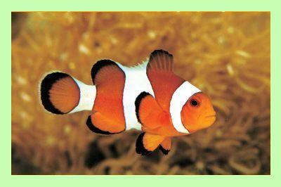 Clownfish - программа для изменения голоса
