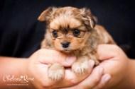 Ari 3rd pup