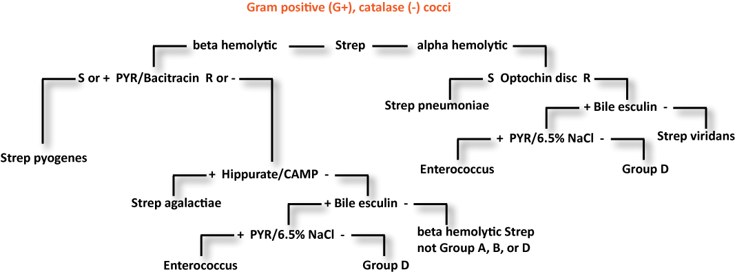 catalase enzyme study flow chart Catalase is an enzyme, which is found in many cells, but in highest levels in the liver because the liver often functions to break down toxins present in the blood catalase catalyzes the break down of hydrogen peroxide:.