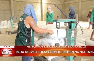 Palay ng mga local farmer, bibilhin ng NFA-Tarlac