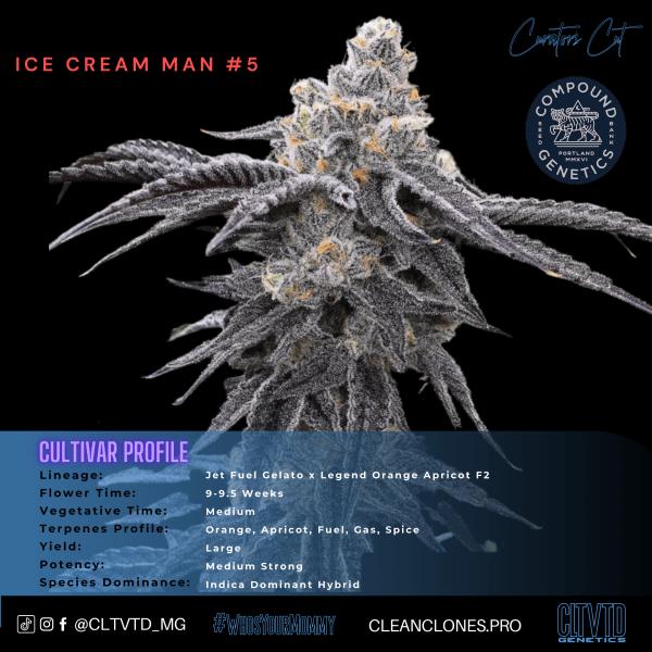 Ice Cream Man #5