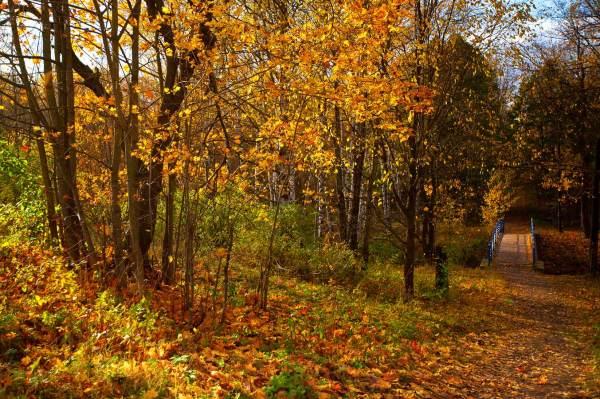 АлексейКузьмин :: Осень в Петербурге :: Природный пейзаж ...