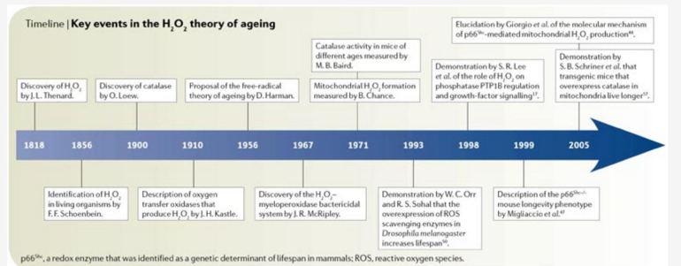 mediator-of-aging