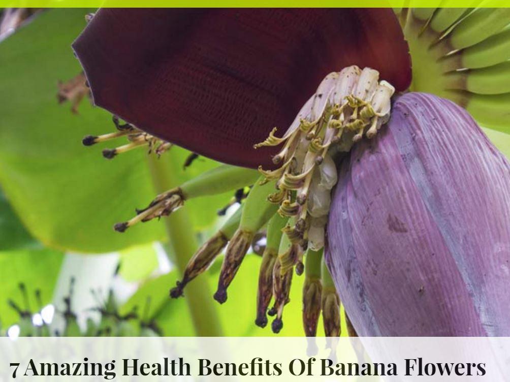 banana flowers.JPG
