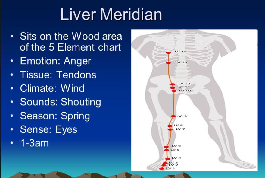 liver meridian p2