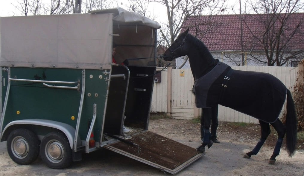 Buy a Horses the trailer
