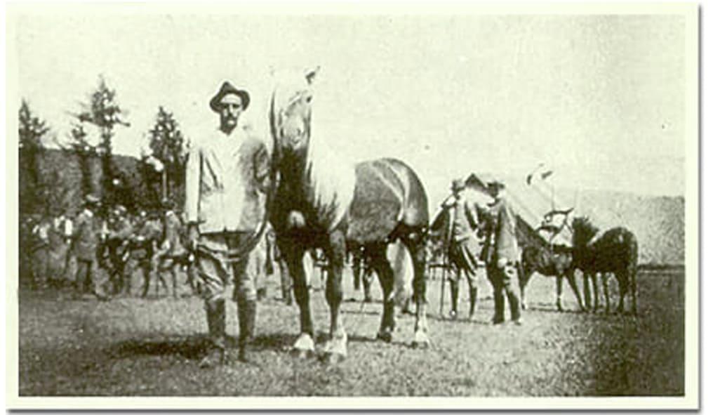 Haflinger horse Folie