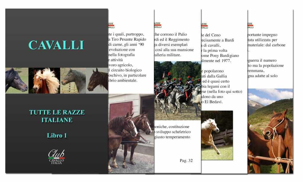 Libro sul cavallo maremmano e altre razze di cavalli