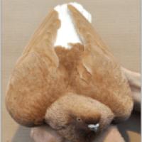 cua blanc canyella