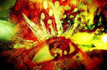 Spectra Vision!, por Lomo-Cam