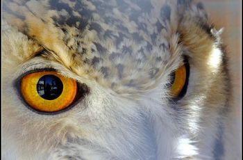 The Eagle Owl Eyes, por Michael Borg (I am Fuji HS20EXR)