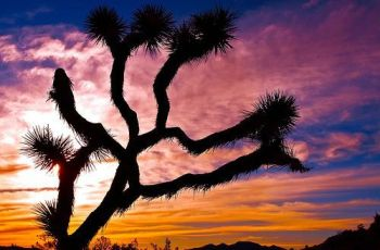 Joshua Tree National Park, por gtall1