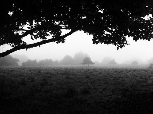 02 Morning Fog Emerging From Trees, por A Guy Taking Pictures