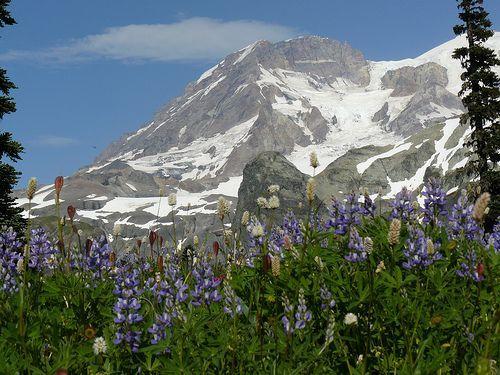 Klapatche Park Wildflowers, por mountain view hiker