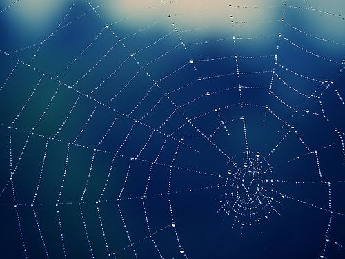 Spiderweb, por 55Laney69