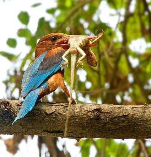 Predator&Prey, por Rathika Ramasamy