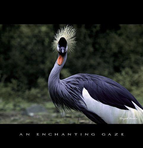 An Enchanting Gaze [IR], por  DocBudie