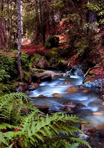 Unicorn Creek, por Dawn