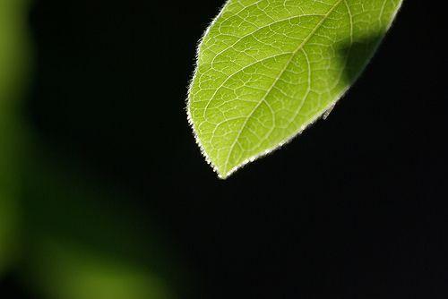 feliu ventura el que diuen els arbres, por visualpanic