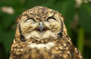 owl's smile, por merec0