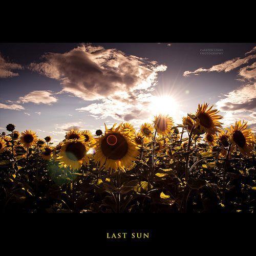 Sun and Flowers, por Hallenser