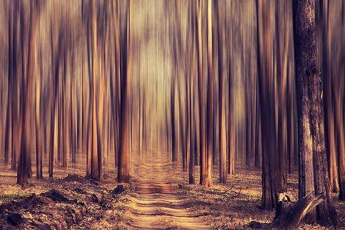 Forest dream!, por VinothChandar