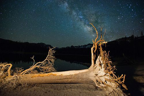 Dead Tree and Milky Way, Horeshoe Lake, Mammoth Lakes Ca, por John Lemieux