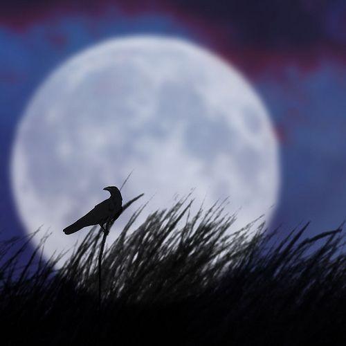 The bird and the moon II, por Luz Adriana Villa A.