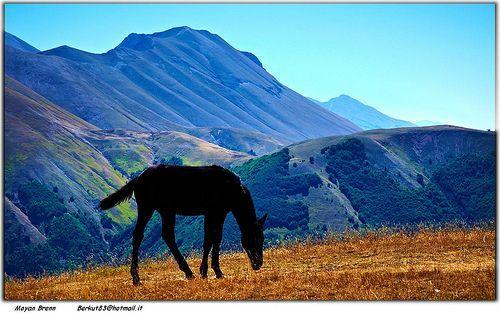 Horse, por Moyan_Brenn