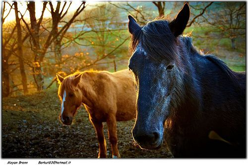 Horses, por Moyan_Brenn
