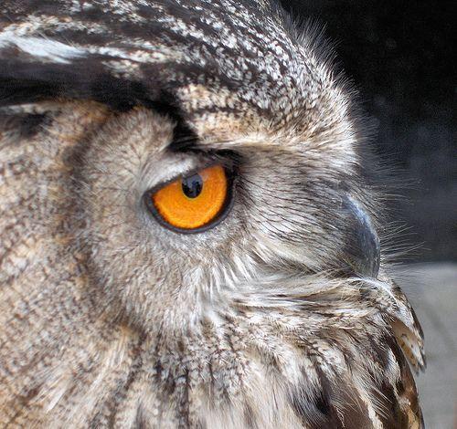 Eye of the Hunter, por foxypar4