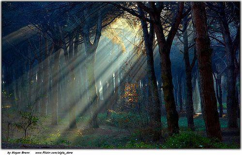 Forest, por Moyan Brenn