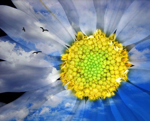 Into the sun, por aussiegall