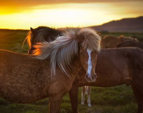 The Golden Horse in Iceland, por Trey Ratcliff