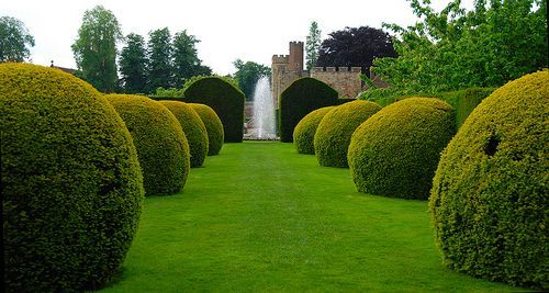 Giant Hedge Balls at Penshurst Place, por Tony Hammond
