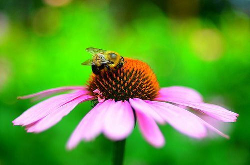 Bumble bee and the flower [EXPLORE], por Will Marlow