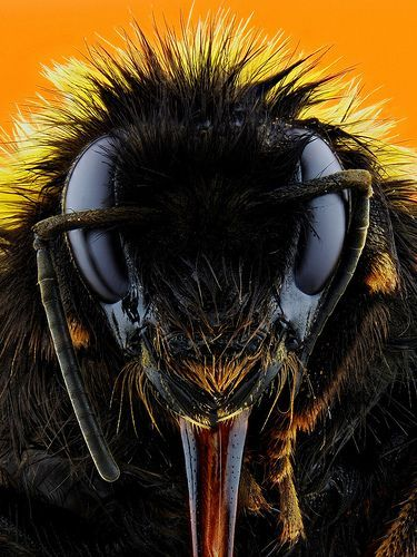 Bumble Bee, por Johan J.Ingles-Le Nobel