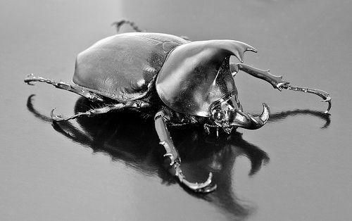 Rhinoceros Beetle, por Nick Wheeler