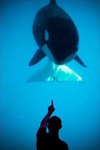 Orca Contact, por Adrien Sifre