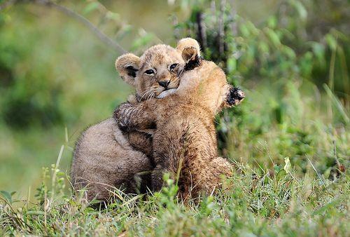 HUGS, por Ray Morris