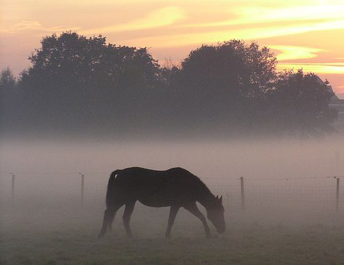 haze with horse, por Eddy Van 3000