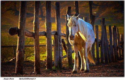 Horse, por Moyan Brenn