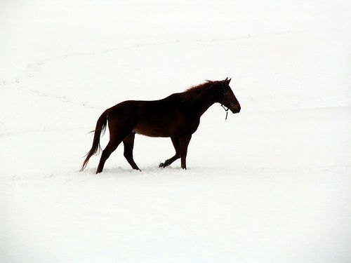 Horse in Snow, 1 of 3, por Christine