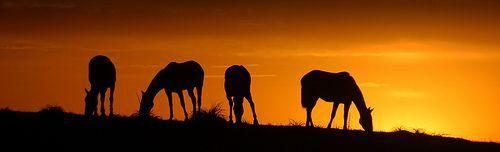 Vendo cruzar sóis e luas..., por Eduardo Amorim