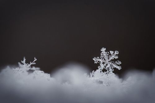 ندفة الثلج, por jennifernish