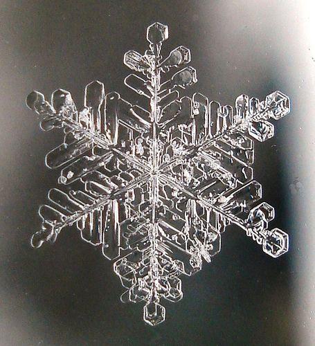 The Snowflake on the Window, por Julie Falk