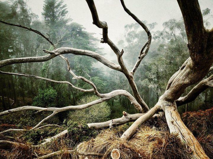 Mejor foto categoría: Árboles de Aaron Pike de San Francisco