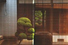 Imagen jap011
